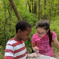 Two students look at bucket of water to identify macroinvertebrates